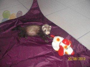 Minnie et moi au véto de nouveau dans Minie & Bouba 100_2881-300x225